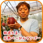特選大玉!完熟べっぴんマンゴー
