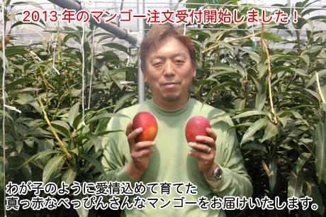 2013年のマンゴー注文受付開始しました!