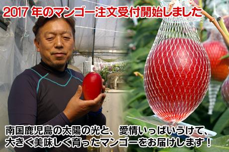 2015年のマンゴーの注文受け付け開始しました。