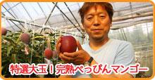 産地直送!完熟ぺっぴんマンゴー