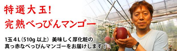 特選大玉!完熟ぺっぴんマンゴー 化粧箱入り2個玉