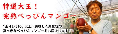 特選大玉!完熟ぺっぴんマンゴー