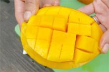 我が子のように大切に育てたマンゴーです!
