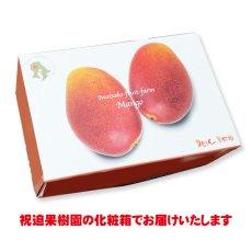 画像3: 産地直送!完熟べっぴんマンゴー 化粧箱入り2個玉 (3)