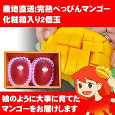 画像1: 産地直送!完熟べっぴんマンゴー 化粧箱入り2個玉 (1)