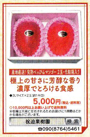 「産地直送!完熟べっぴんマンゴー 化粧箱入り2個玉