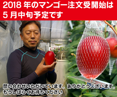 2018年のマンゴーの注文受け開始は5月中旬になりそうです。