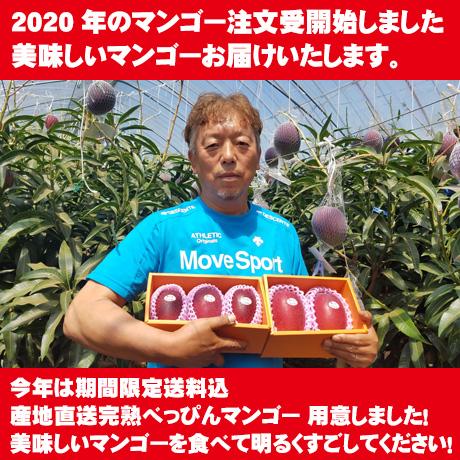 2020年のマンゴーの注文受け付け開始しました。