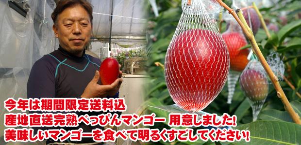 「美味しいマンゴーを食べて明るくすごしてほしい!」期間限定送料込、産地直送完熟べっぴんマンゴー 用意しました!