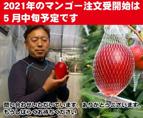 2021年のマンゴーの取り扱い開始5月15日以頃になりそうです。
