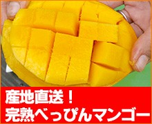 産地直送!完熟べっぴんマンゴー